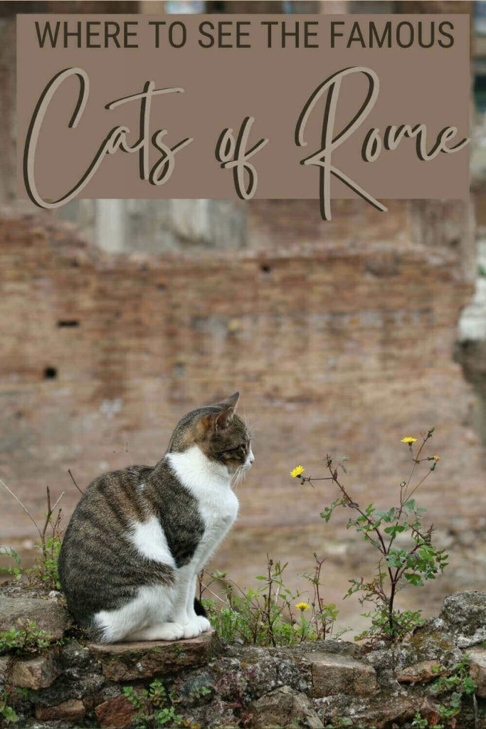 Discover where to see the cats of Rome - via @strictlyrome