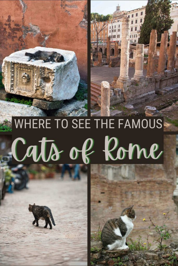 Read about the cats of Rome - via @strictlyrome