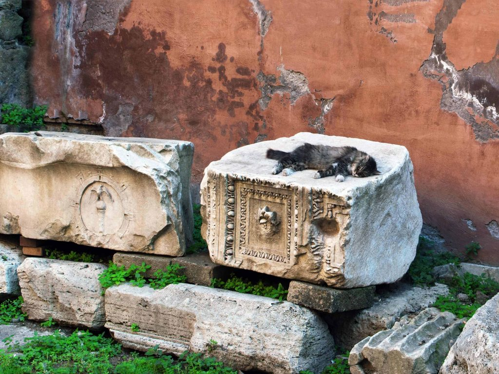 cats of Rome