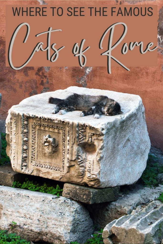 Read about the beautiful cats of Rome - via @strictlyrome